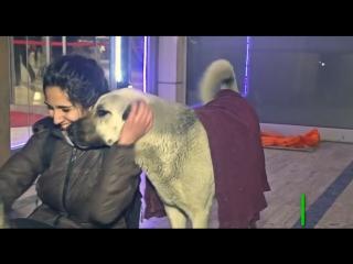Активисты в Стамбуле подарили бездомным собакам тёплые одеяла