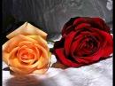 РОЗЫ (клип) Романс Две розы - Наталия Муравьева Лучшие русские романсы Romances Rose