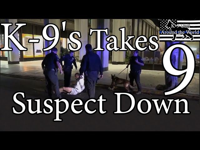 K-9's Takes Suspect Down 9