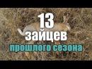 Охота на зайца - Лучшие моменты - Трофеи, выстрелы, работа собаки / Hare hunting best moments