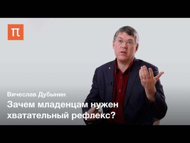Двигательные центры мозга — Вячеслав Дубынин
