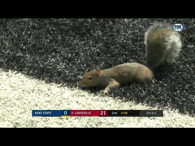 Instant Classic: Squirrel scores touchdown in Louisville-Kent State game