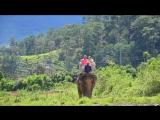 катание на слоне, по просторам Вьетнама