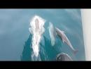 Прогулка с дельфинами в Сочи