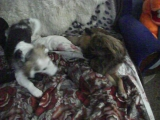 Джекки и Багира