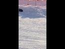 Тольятти 2017 SnowDogs