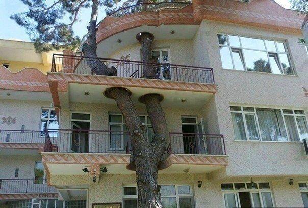 Уважение к природе в архитектуре