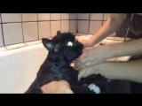 Кот говорит я бык, я мужик! кот разговаривает по-человечески Кот говорит ! Не хочу