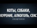 Коты, собаки, курение, алкоголь, секс. Александр Палиенко.