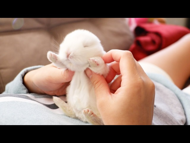 The Cutest Baby Bunny Rabbit Compilation EVER