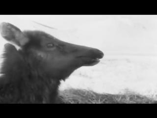 Вася Обломов спел песню про реновацию в Москве - Город 812