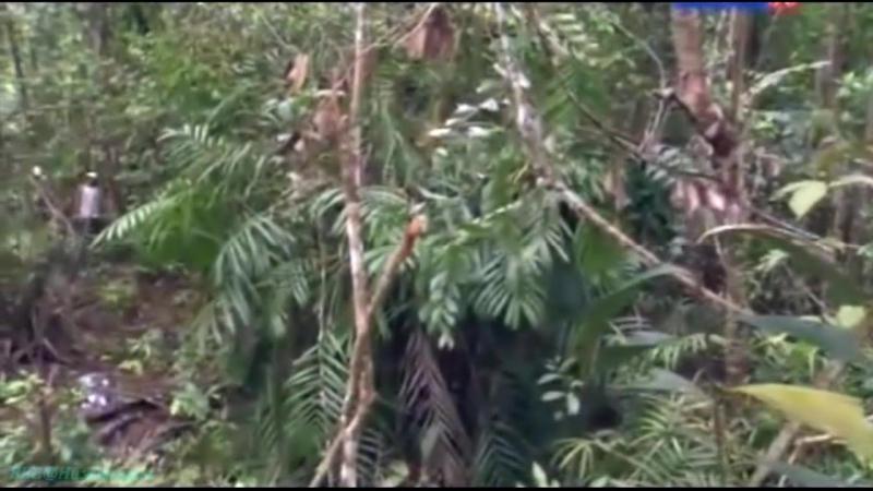 «Остров орангутанов (03). Пропавшие» (Документальный, животные, 2007)