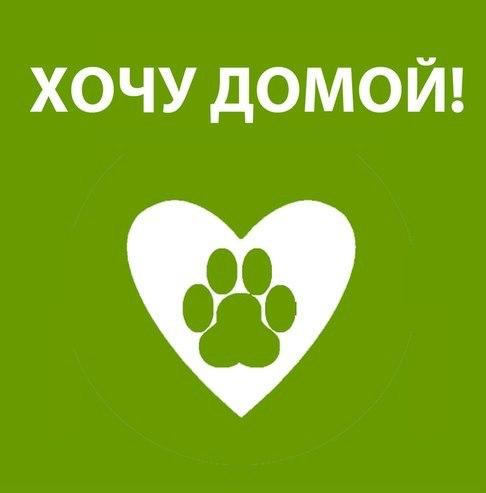 С любимыми не расставайтесь...💔  Добрый, взрослый по годам пёс- потеря
