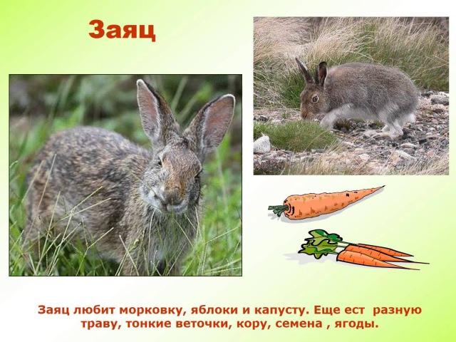 Презентация для детей. Дикие животные, часть 1.