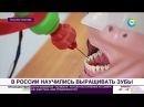 Российские ученые научились выращивать органы - МИР24