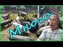 1 год с вьетнамскими свиньями Результаты Видео подборка ЛПХ Меркурий Моё подв