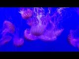 lana__112 video