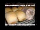 Вы наверно падумоли что я хлеб но я нехлеб я кот не эште миня