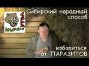 Сибирский народный способ избавиться от паразитов