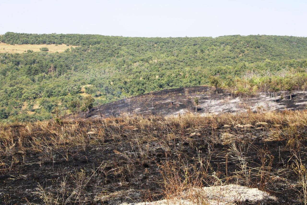 Выгоревшая часть леса
