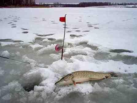 щука по последнему льду на жерлицы