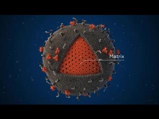 Структура вириона ВИЧ - 3D-модель и анимация Visual Science