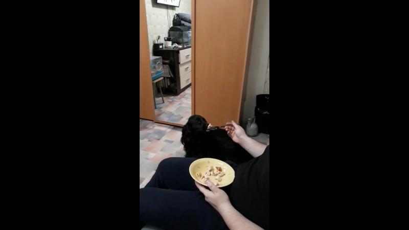 Лорра кушает!)