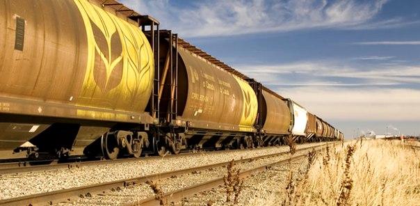Тысячу тонн зерна отправил Красноярский край в Китай Первая партия пш