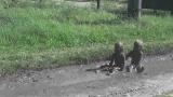 Больше грязи-здоровее ребенок