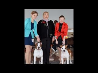 29.01.2016. NDS. Kharkov, Ukraine. Judge Tatyana Shiyan. Ukraine