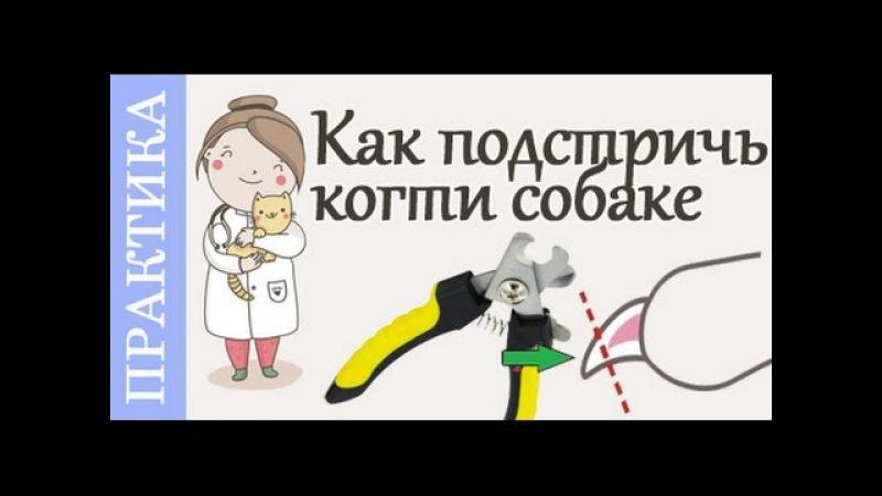 Как подстричь когти собаке Советы ветеринара