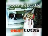 #jelousy #Rocky #boxer #germanboxer #mypet #bengalcat #ревность #бенгальскийкот #Рокки #немецкийбоксёр #мойпитомец