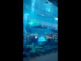Второй по величине аквариум в мире. Дубай, ОАЭ.