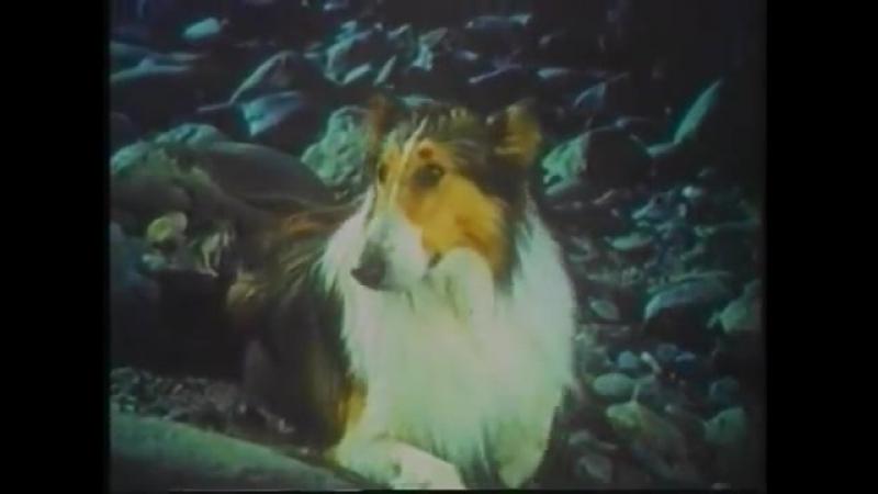 Х Ф Большое приключение Лесси 1963г