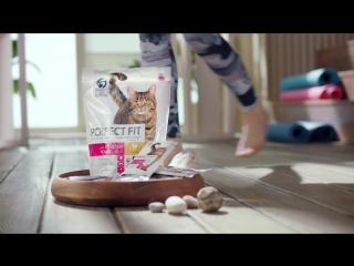 Perfect Fit | Бодрость в духе кошек