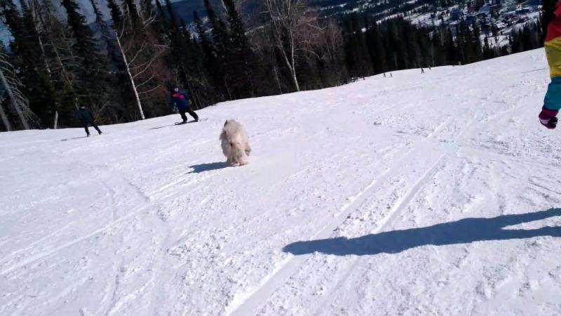 собака-покатака