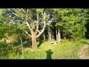 Тропинка в лесу и свежий воздух всё как обычно