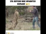Когда кенгуру напала на твою собаку и Конор МакГрегор решил за вас отомстить.