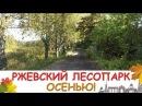 Ржевский Лесопарк. Прогулка по осеннему лесу!