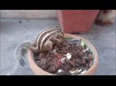 Mommy Squirrel finds out her baby is safe Watch what happens next