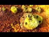 Unusual Cosmic Process - Paints Of Danakil