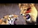 КАКОЕ ЖИВОТНОЕ СИЛЬНЕЕ КУСАЕТ? лев или тигр? тигр или гиена?горилла или гризли?