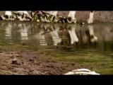 BBC - Walking With Dinosaurs SP2 Allosaurus Big Al Uncovered  - ArabHD.net