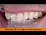 Изучение принципов естественной улыбки. Анатомия передних и боковых зубов. Восковое моделирование