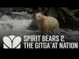 Rainforest Guardians Spirit Bears and the Gitga'at Nation