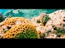 Подводный мир Египта 2017. Видео дайвинга в красном море. Подводное плаванье с маской и ластами.