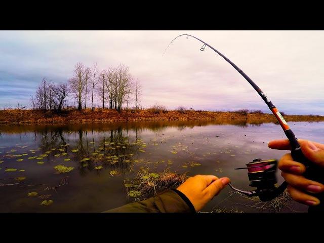 Рыбалка осень 2017 КАК ПОЙМАТЬ ОКУНЯ ,НЕ ЗАЦЕПИВ ОНДАТРУ! Окунь осенью на микроджиг