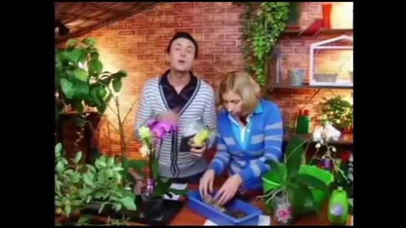 Орхидея Мастер класс Марина Рыкалина и Виталий Декабрев Дачные радости