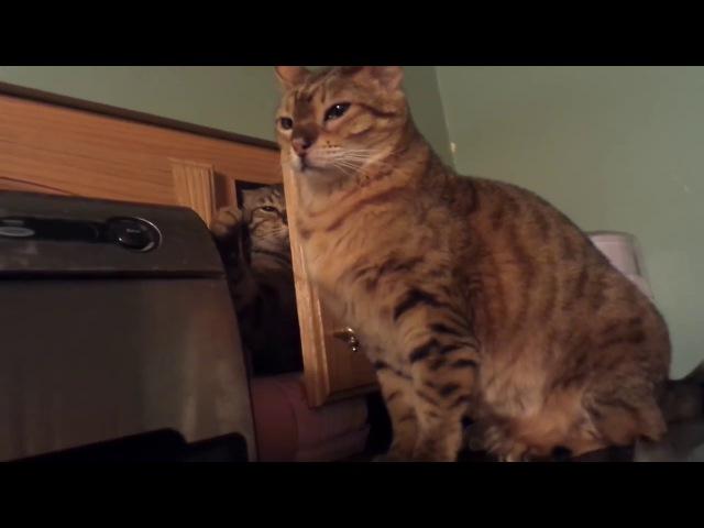 Omae wa mo....shindeiru. (Cat version)