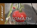 Выращивание ТОМАТОВ крупноплодные сорта. Я сажаю